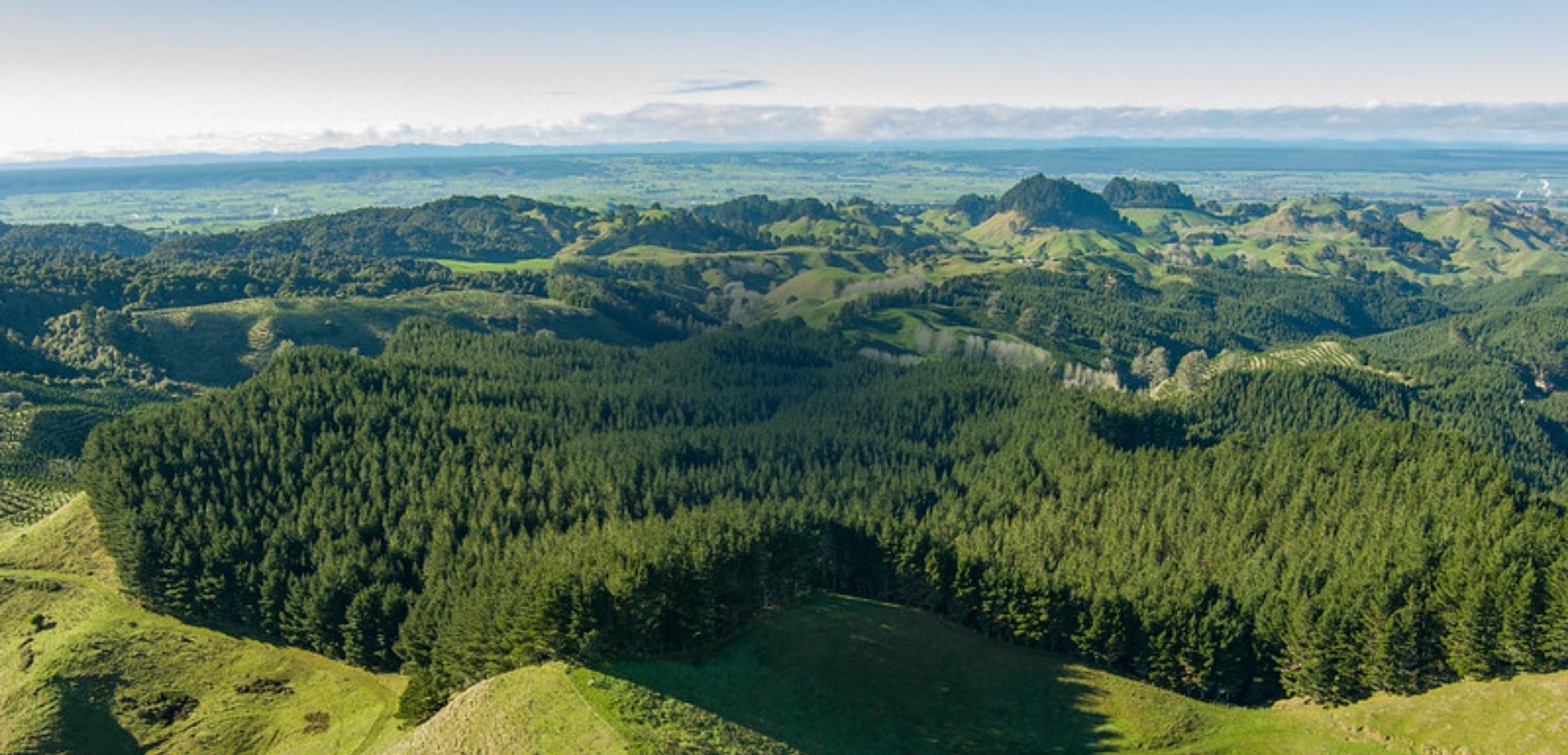 Pāmu Forestry Strategy 2020-2029